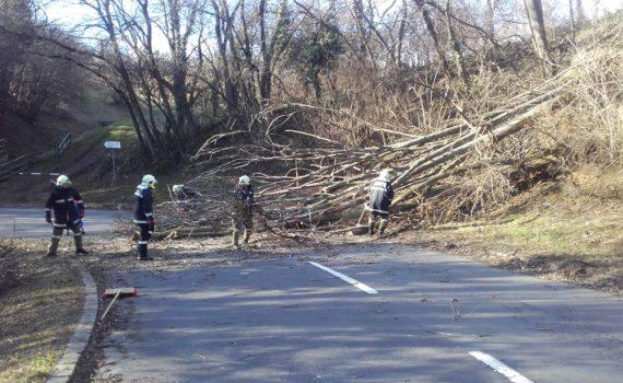 Baum blockiert Rosalienstraße